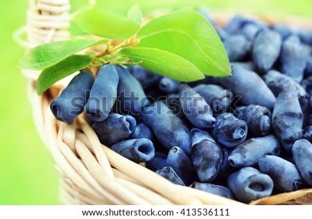 Basket of fresh ripe honeysuckle berries, selective focus - stock photo