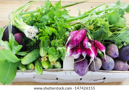 Basket of fresh vegetables: cucumbers, blue potatoes, french radishes. spring onion, parsley, dill and spinach - stock photo