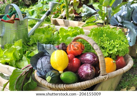 basket of fresh vegetables in a placed vegetable garden - stock photo