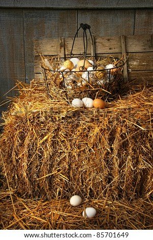 Basket of freshly laid  eggs lying on straw in the barn - stock photo