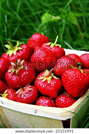 Basket of freshly picked strawberries