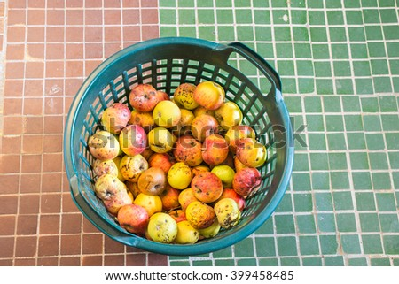 Basket of rotten apples - stock photo