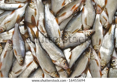 Basket of small fishes in the market - stock photo
