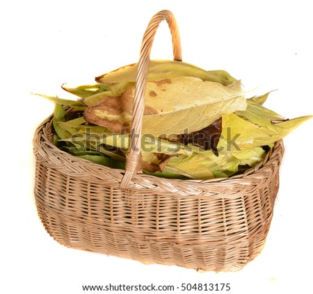 basket of tobacco leaves