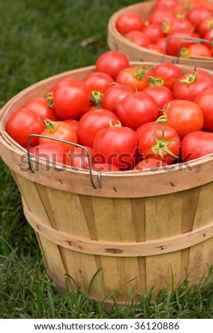 Basket of Tomatoes - stock photo