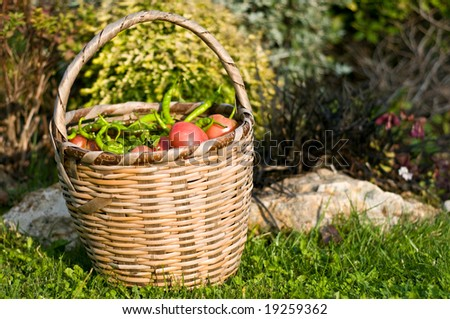 Basket of tomatoes and green peppers