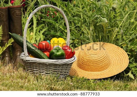 basket of vegetables and in a botanical garden - stock photo