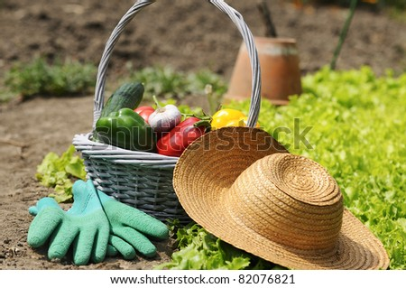 basket of vegetables freshly picked in the garden - stock photo