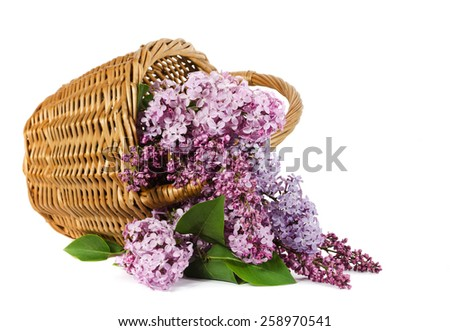 basket with a branch of lilac flower isolated on a white - stock photo