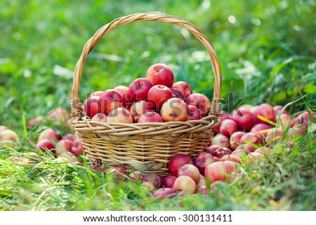 Basket with apples on the grass