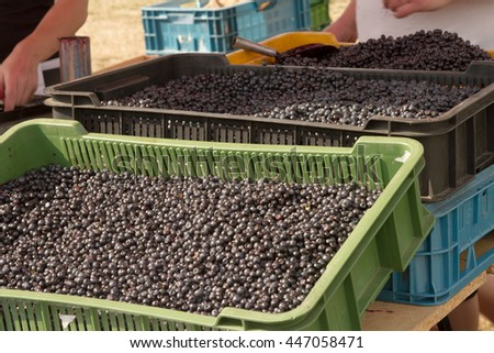 Basket with blueberries at the farmers market - stock photo