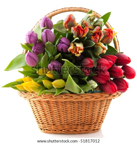 Basket with colorful bouquets of tulips on white background - stock photo