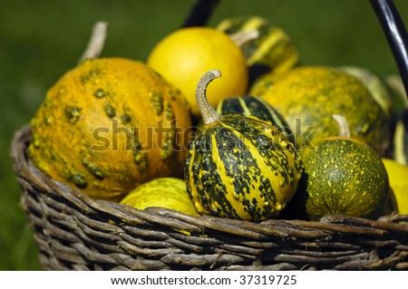 Basket with Cucurbita - stock photo