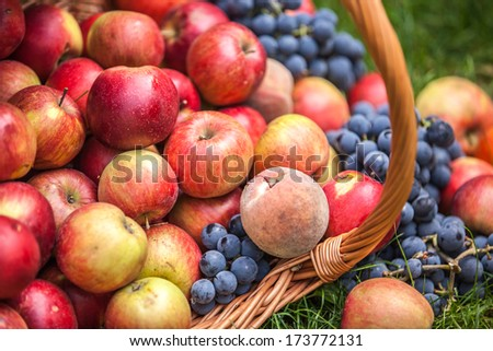 Basket with fruit on a green grass  - stock photo
