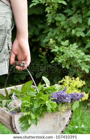 basket with herbs/fresh herbs/summer - stock photo