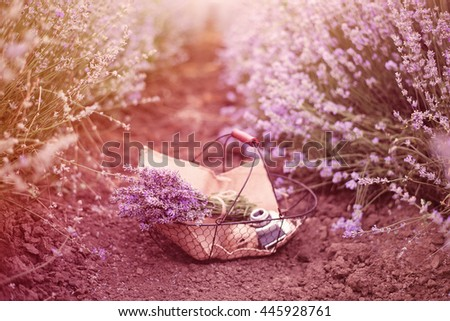 Basket with lavender bouquet, old antique camera and ball with twine. Lavender flowers between rows of lavender field. Purple tinting, sunny hazy, haze - stock photo
