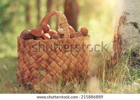 Basket with mushrooms autumn forest sun rays - stock photo