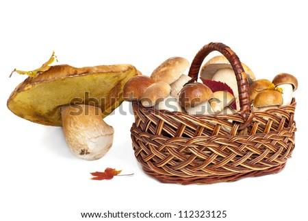 Basket with mushrooms, isolated on white - stock photo