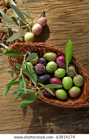 basket with olive branch - stock photo