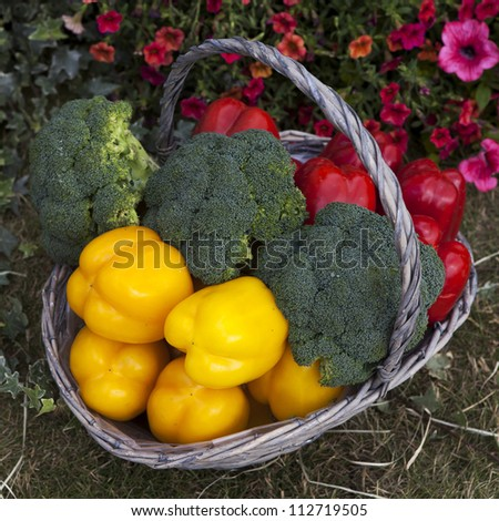 Basket with pepper, cabbage in the garden - stock photo