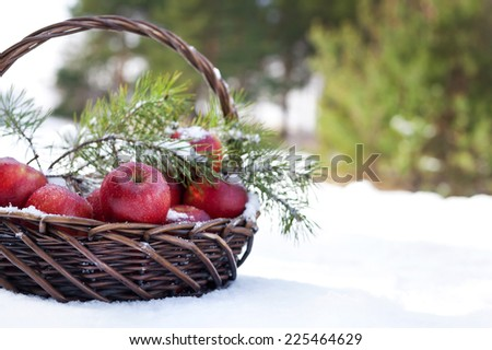 Basket with red apples decorated fir branch, snow-covered in nature winter forest - stock photo