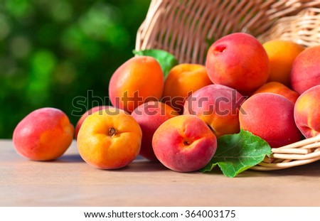 basket with ripe apricots on wooden table in garden - stock photo