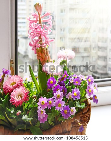 Basket with spring flowers in the sun on the window - stock photo