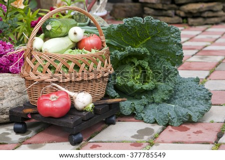 Basket with vegetables: marrow, zucchini, eggplant, pepper, carrots, cucumbers and tomatoes. Vegetables in a basket in the garden - stock photo