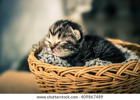 Basket with young kittens. Beauty and tenderness - stock photo