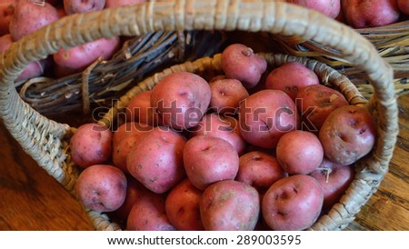 Baskets full of fresh new potatoes, locally grown in Florida. Fresh produce in baskets, red-skinned new potatoes, raw with skins still on. - stock photo