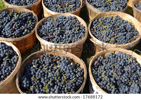 Baskets of Grapes - stock photo
