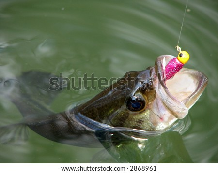 Bass - stock photo