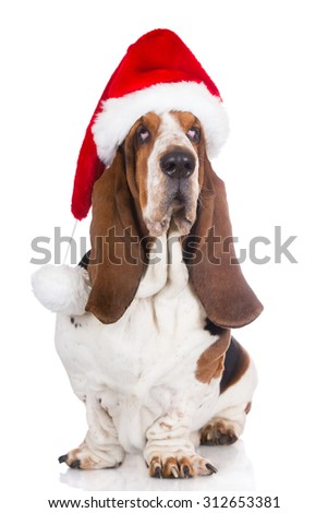basset hound dog in a santa hat - stock photo