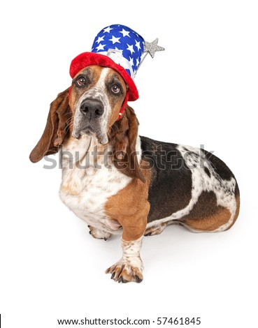 Basset Hound dog wearing a 4th of July hat. Isolated on white - stock photo