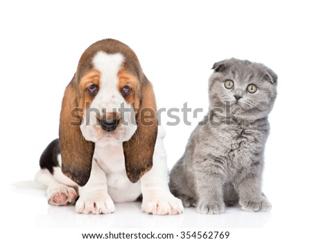 Basset hound puppy and cat sitting together. isolated on white background - stock photo