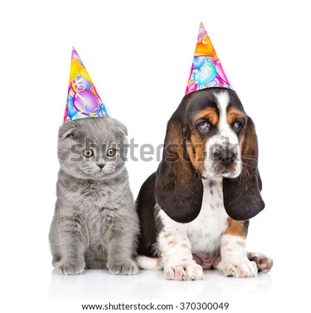 Basset hound puppy and kitten with birthday hats. isolated on white background - stock photo