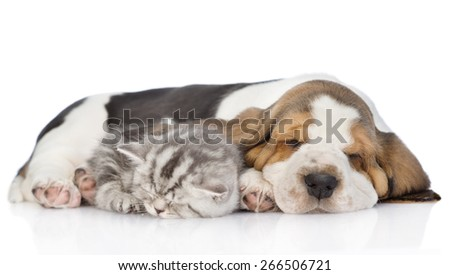 Basset hound puppy sleeping with tabby kitten. isolated on white background - stock photo