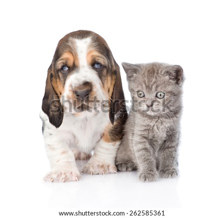 Basset hound puppy with kitten sitting together. isolated on white background - stock photo