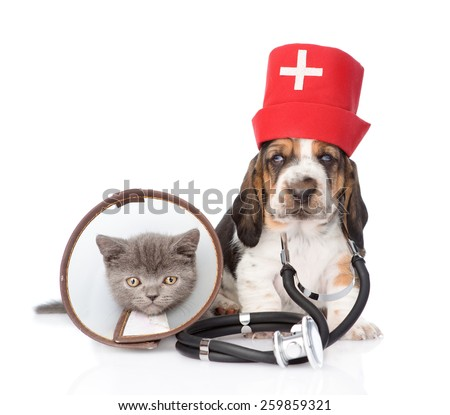 Basset hound puppy with stethoscope on his neck and kitten wearing a funnel collar. isolated on white background - stock photo