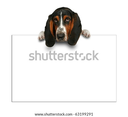 basset hound with sign - stock photo