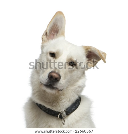 Bastard in front of a white background - stock photo