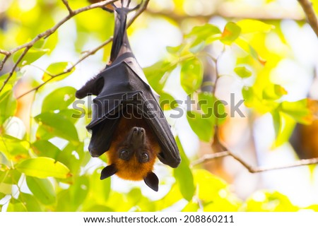 Bat. - stock photo