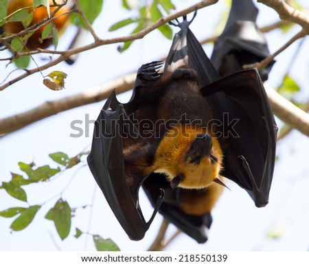 Bat. - stock photo