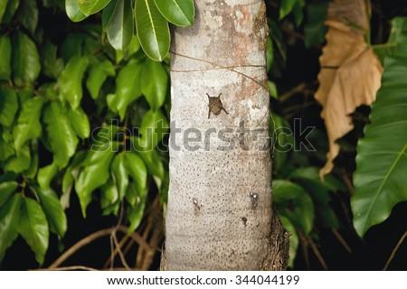 bat on a tree trunk, Lake Sandoval, Amazonia, Peru - stock photo