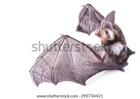Bat on a white background - stock photo