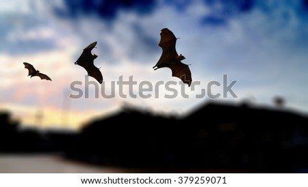Bat silhouettes flying over old factory (Blur background) in sunset time