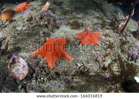 Bat Stars - stock photo