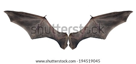 bat wings - stock photo