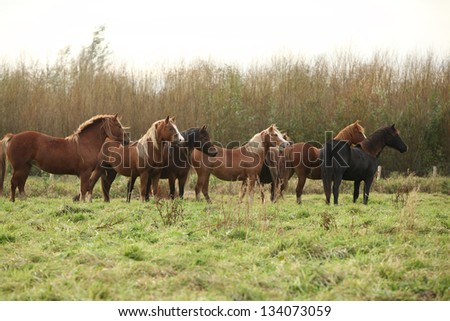 Batch of horses looking on autumn pasturage
