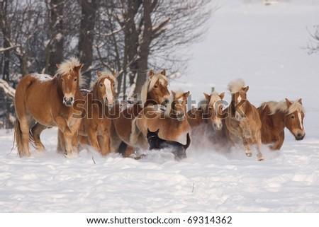Batch of horses running - stock photo